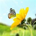 Girasoles de primavera